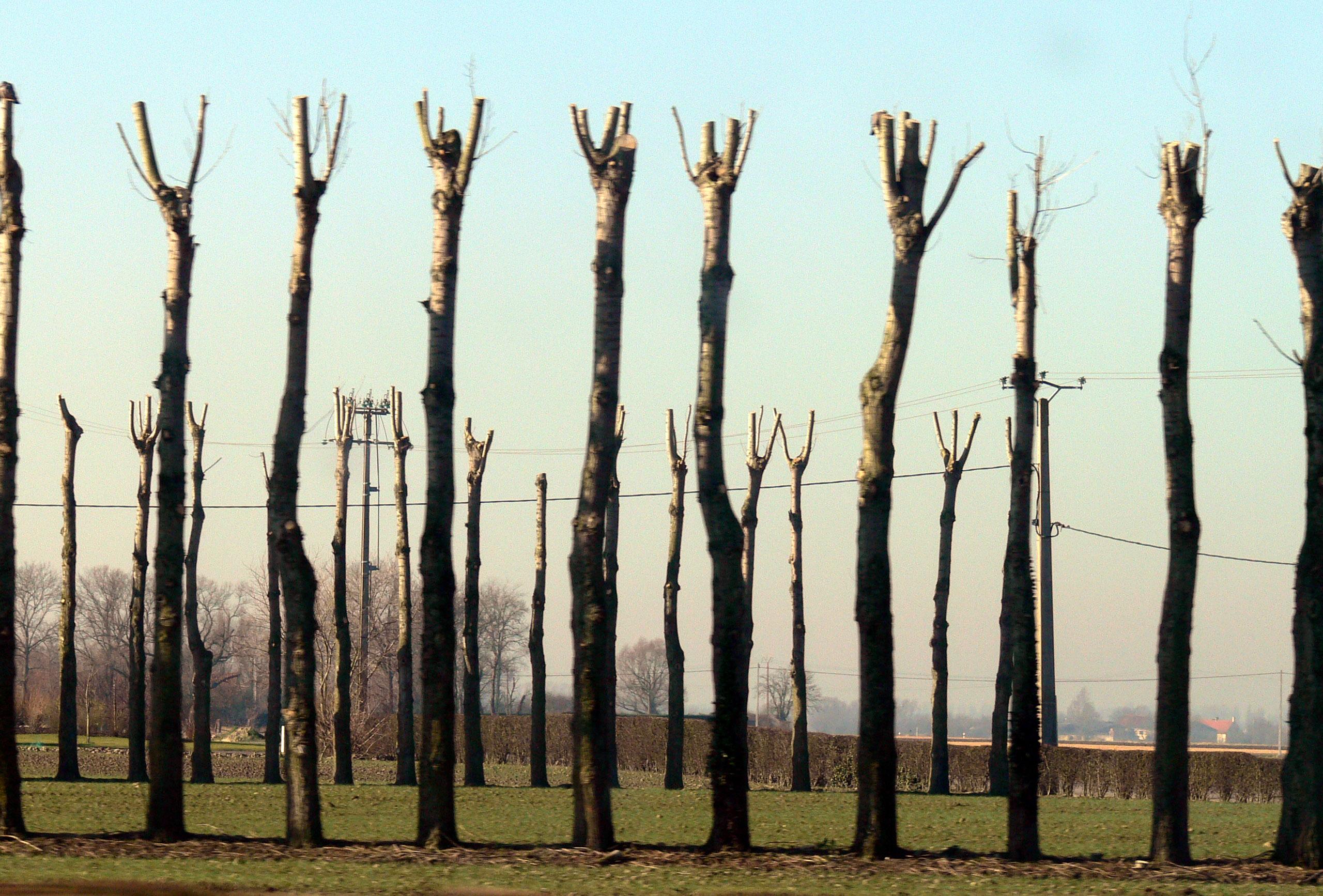 Que faut-il savoir sur l'émondage d'un arbre ?