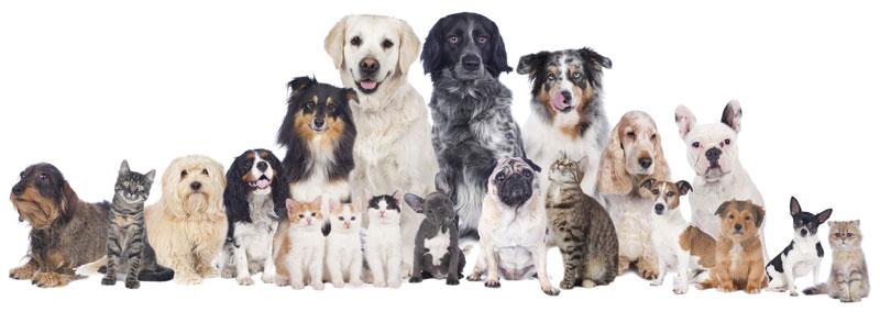 Des idées cadeaux pour les amoureux des animaux