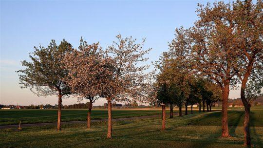 Les points essentiels à savoir pour réussir la taille des arbres fruitiers