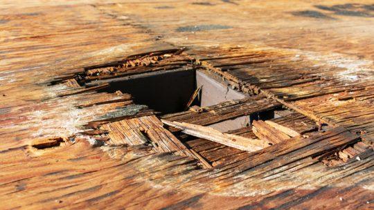 Apparition de la mérule dans une maison humide